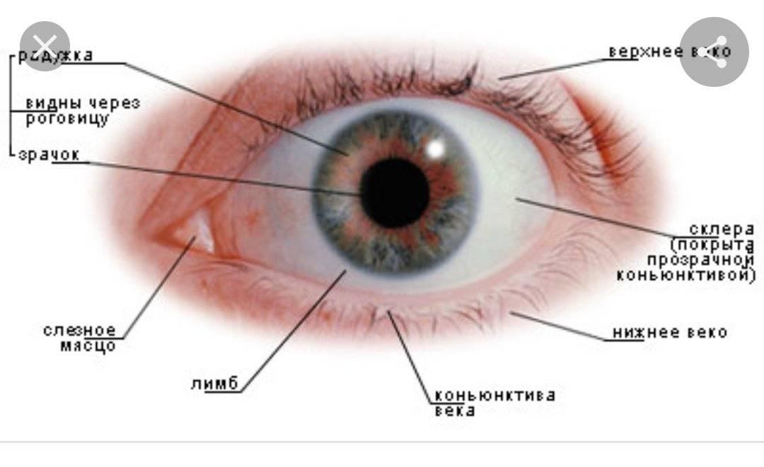 Конъюнктива глаза: что это такое, симптомы и лечение патологий