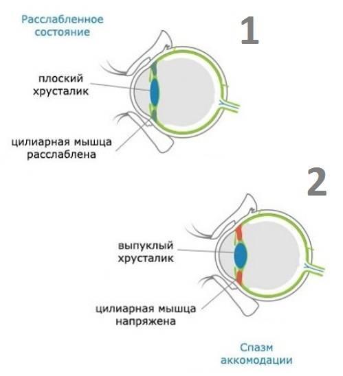 Что такое аккомодация глаза?