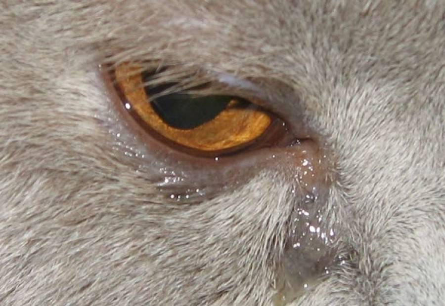 Причины слезотечения одного глаза и методы лечения