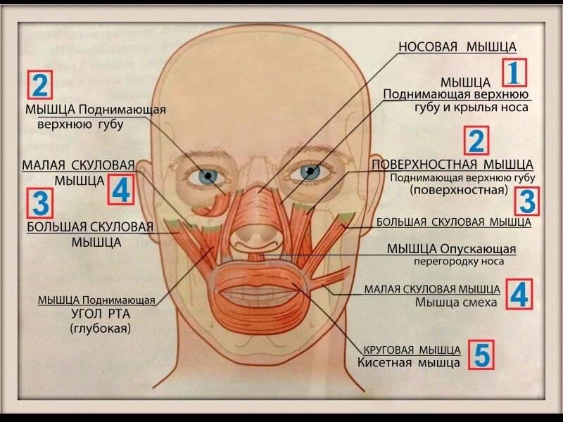Болит кость под глазом или над ним при нажатии: причины и лечение симптома