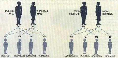 Новости генетики: близорукость передается по наследству