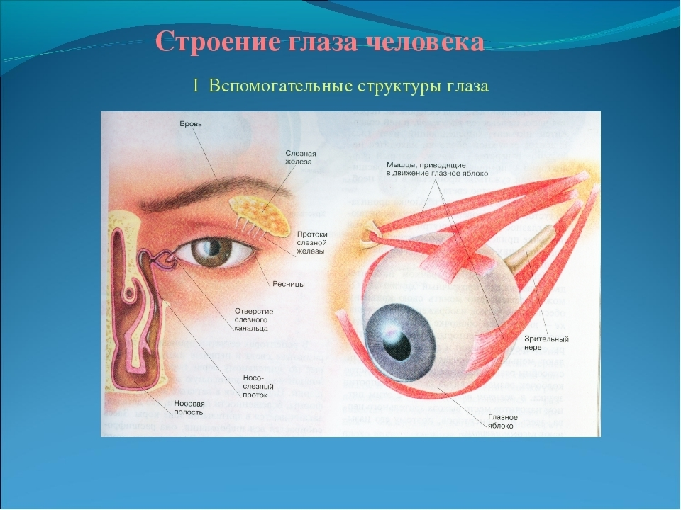 Глазное яблоко: анатомическое строение, функции и возможные патологии