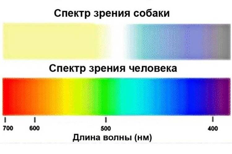 Почему человеческий глаз различает больше оттенков зеленого фарго. почему человеческий глаз различает больше оттенков зеленого