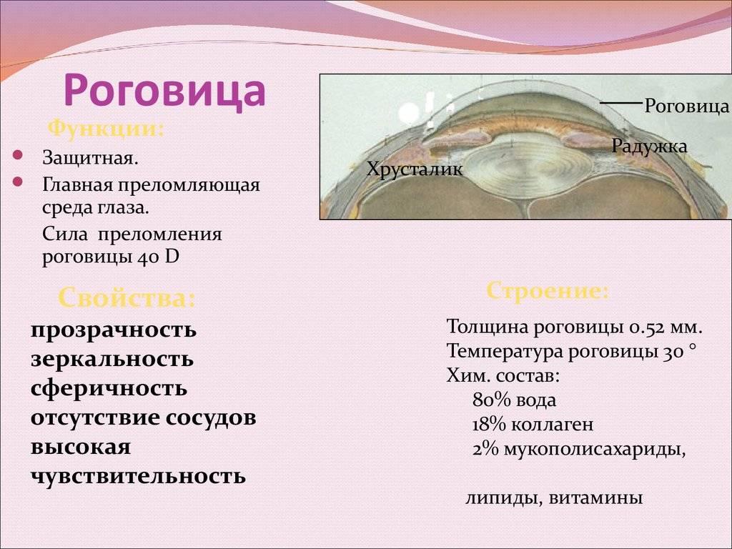 Роговица глаза: что это такое, строение и слои, функции и методы исследования роговицы