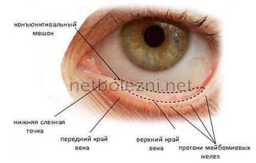 Почему дергается веко левого глаза и что делать? сайт «московская офтальмология»