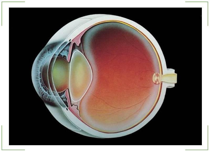 Хрусталик глаза: строение и функции   заболевания хрусталика