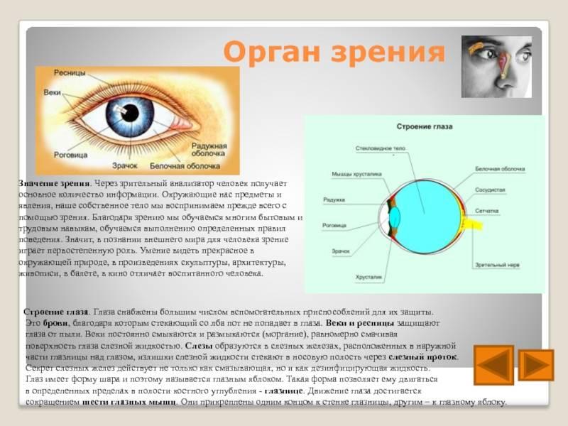 Урок 2информация и знания. восприятие информации человеком