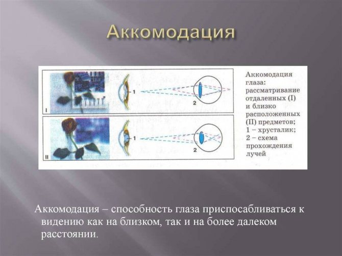 Аккомодация глаза что это за болезнь. что нужно знать об  аккомодации глаза — офтальмология