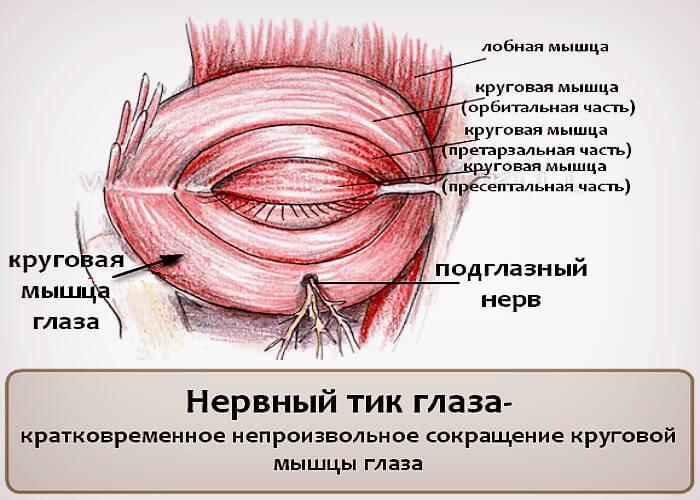 Нервный тик глаза: причины, лечение у взрослых и детей