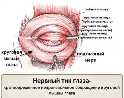 Что делать, если дергается правый или левый глаз: причины, лечение ? заболевания