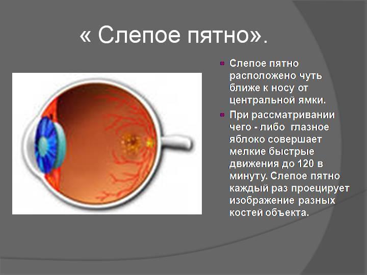 Макула глаза: строение, функции, симптомы, лечение