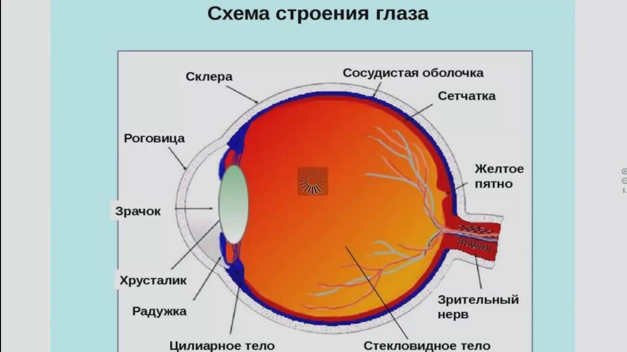 Слепое пятно