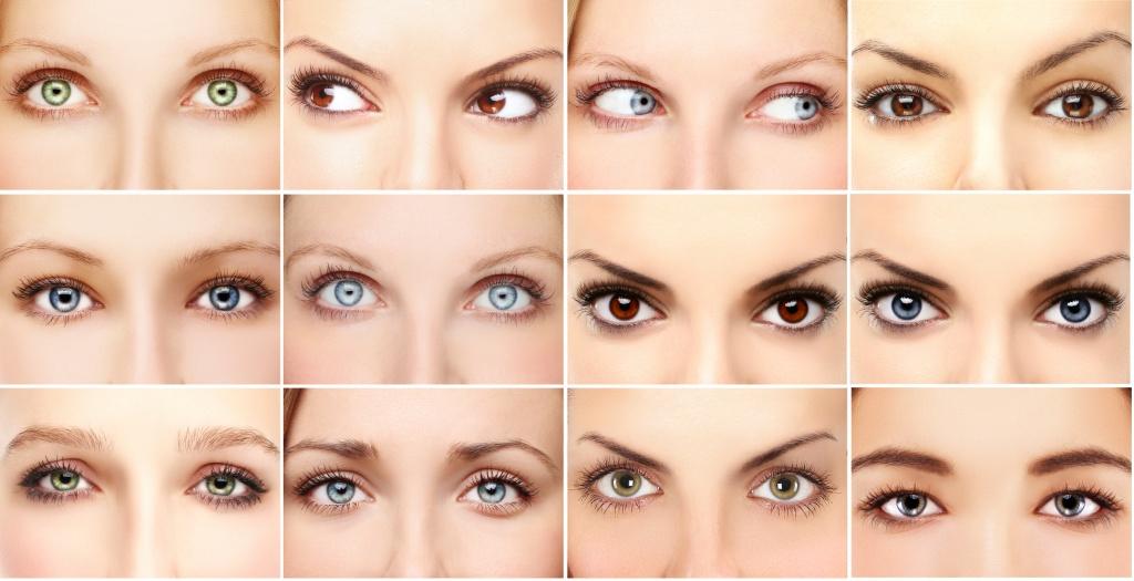 Строение глаза - особенности, из чего состоит зрительная система