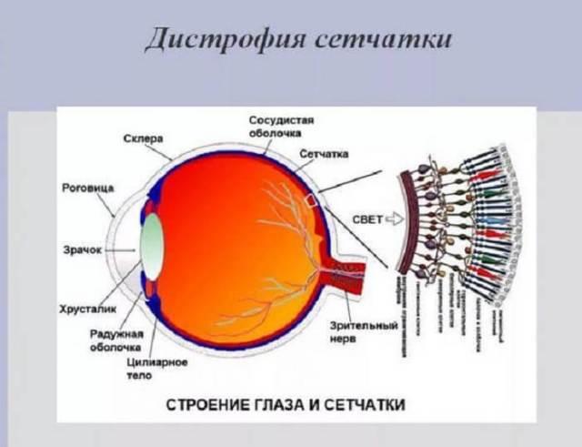 Исследование и лечение сетчатки