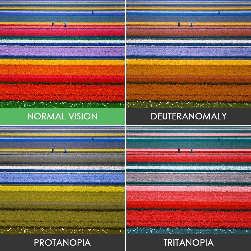 Что такое дальтонизм и как видят дальтоники: в каких цветах предстает мир человеку с нарушением цветоощущения