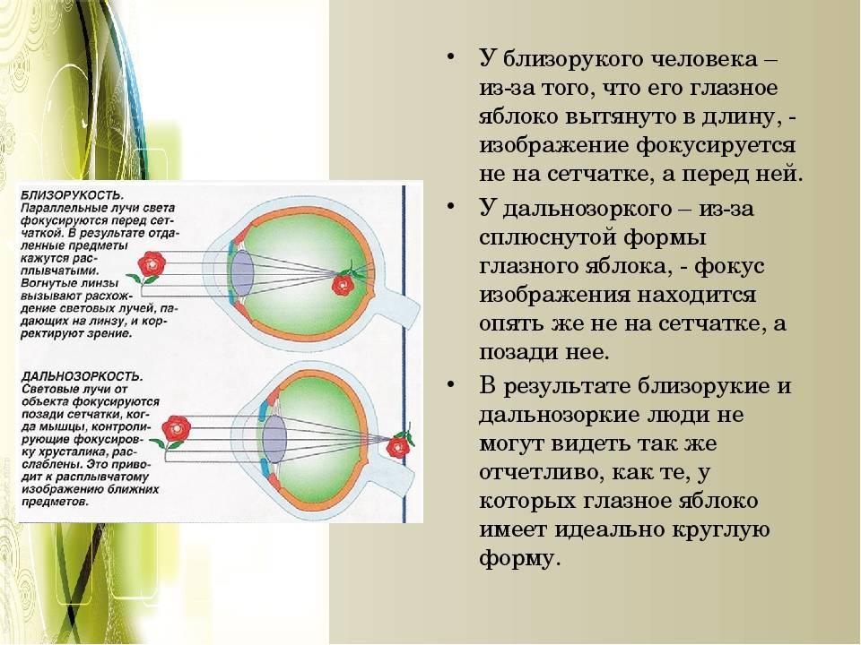 Описание глаза человека, его устройство, особенности строения сетчатки и глазного яблока