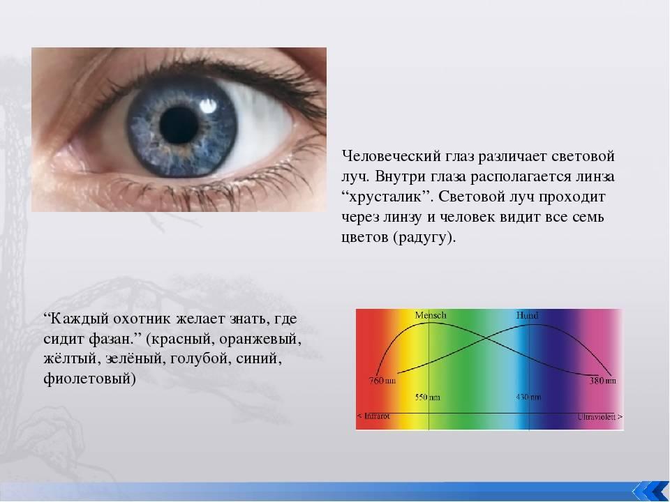 Посмотрите как дальтоники видят и различают цвета