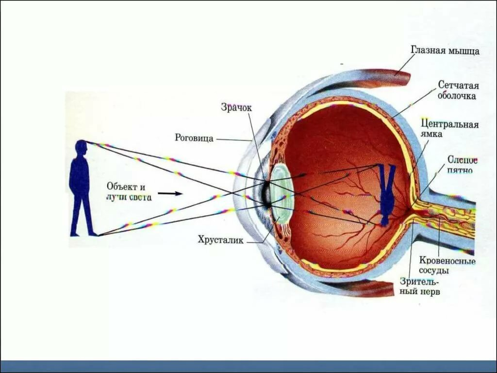 Один глаз видит хуже другого: группы риска у взрослых, основные причины, как исправить временное ухудшение зрения, диагностика и способы лечения