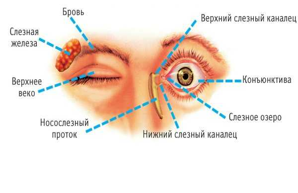 Почему закисают глаза у взрослого?