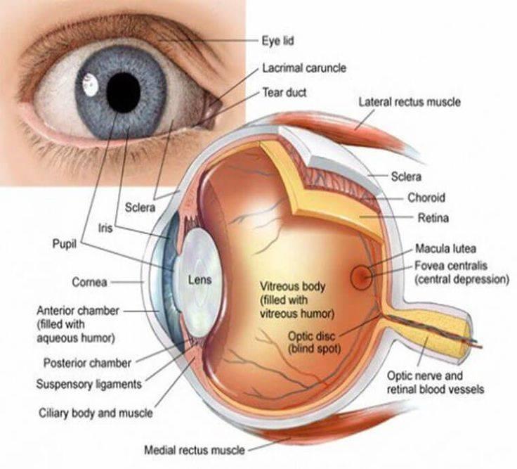 Обозначение правого и левого глаза