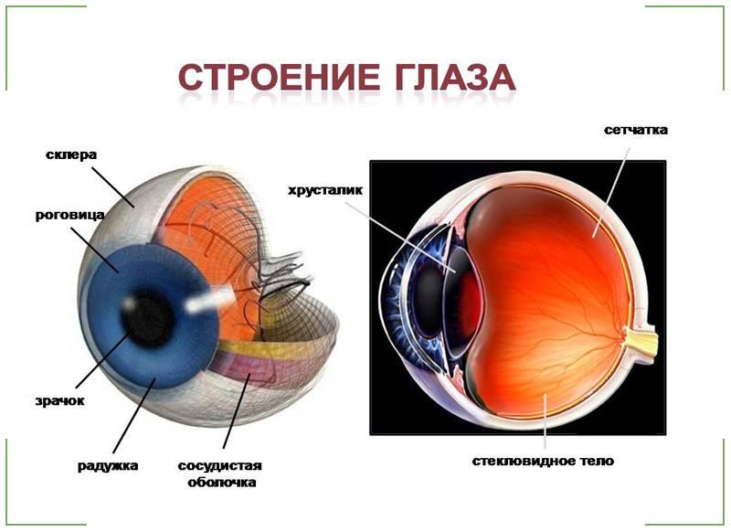 Причины экзофтальма одного глаза или обоих, симптомы и лечение