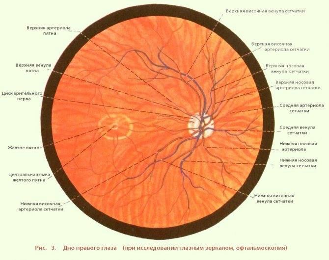 Глазное дно: как проверяют и для чего проводят осмотр