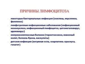 Анизейкония