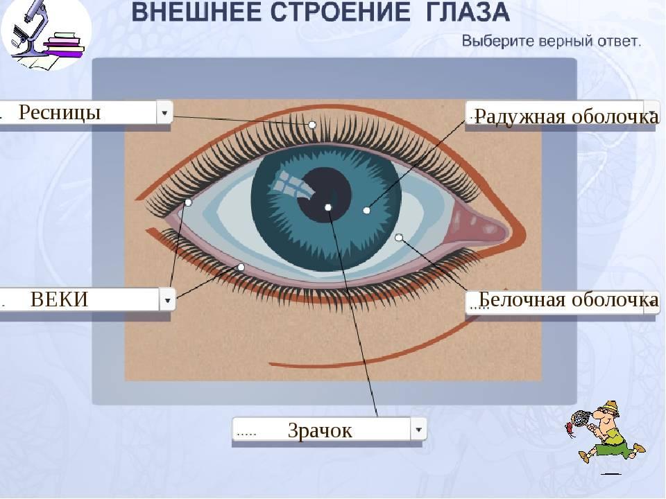 Нарост на глазном яблоке у человека - прозрачный или желтый, причины, как избавиться