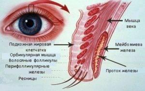 Закупорка мейбомиевых желез лечение
