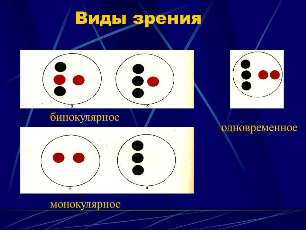 Что обеспечивает бинокулярное и стереоскопическое зрение, что представляет собой монокулярное зрение