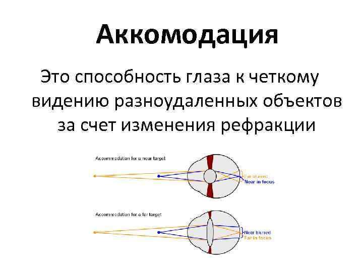 Аккомодация глаза и ее нарушения, симптомы расстройства механизма зрения, лечение и профилактика