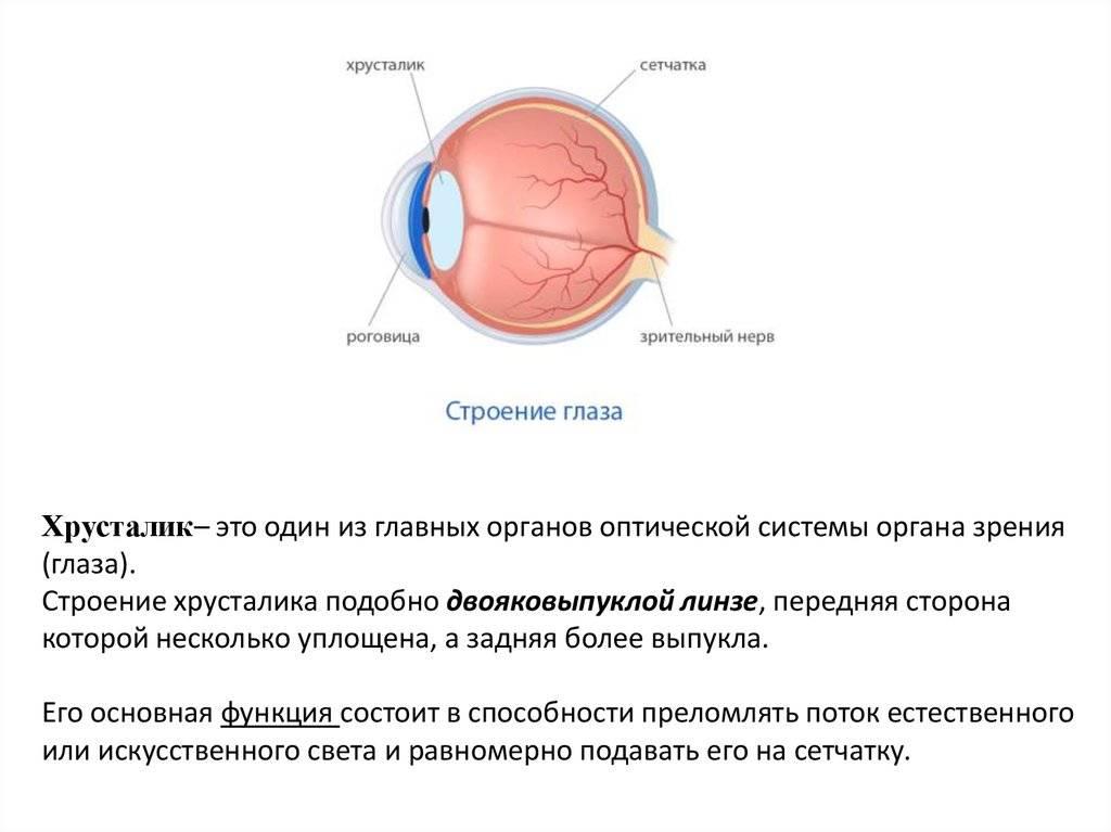 Цилиарное тело глаза: функции, анатомия и характеристика возможных патологий