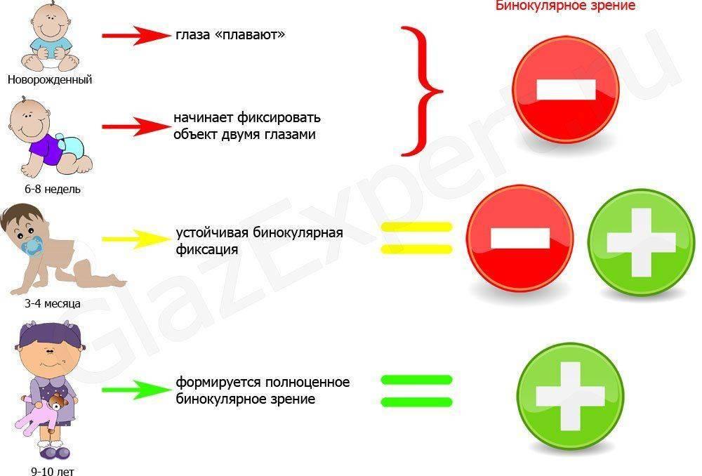 Как развивается бинокулярное зрение