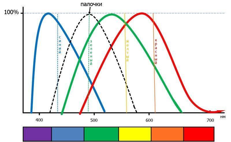 Адаптометрия и цветовое зрение